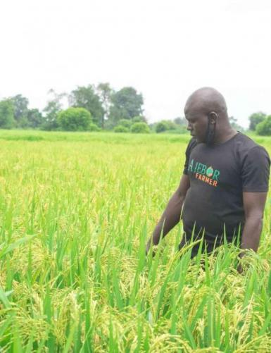 Invest in Rice Farming